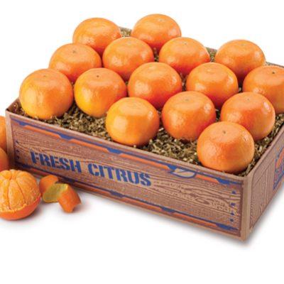 Florida Tangerines