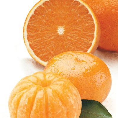 Orlando Tangelos and Navel Oranges