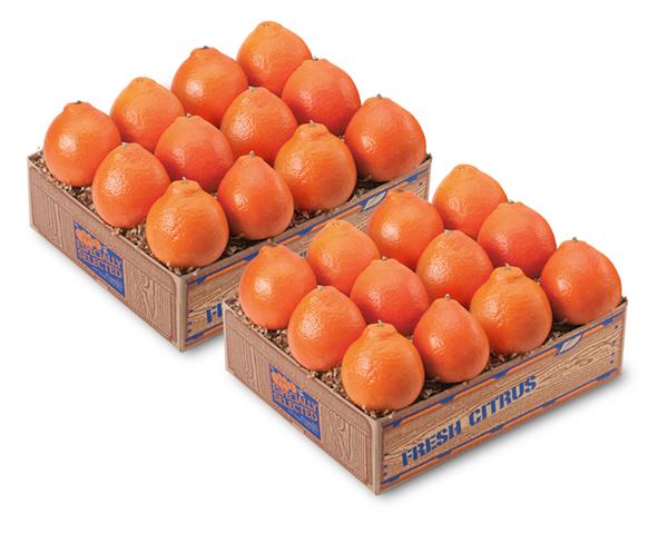 Florida Honeybell Oranges