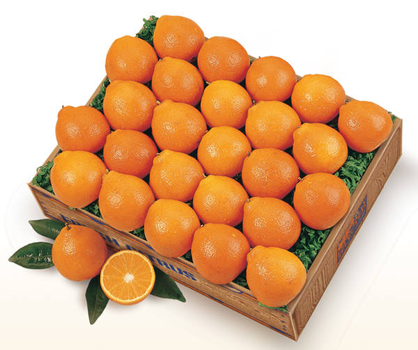 Florida Baby Honeybell Oranges