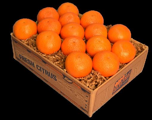 Florida Temple Oranges