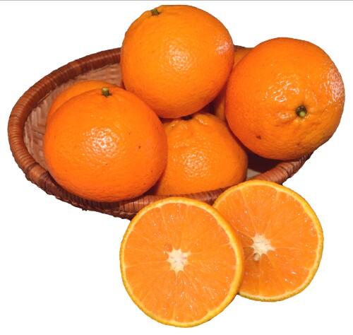 Florida Ortanique Oranges